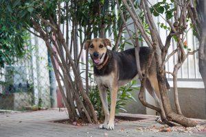 DOG doggies (140 of 233)