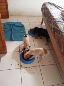 Alex pups 6 feb (4)
