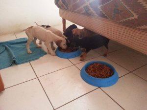 Alex pups 6 feb (6)