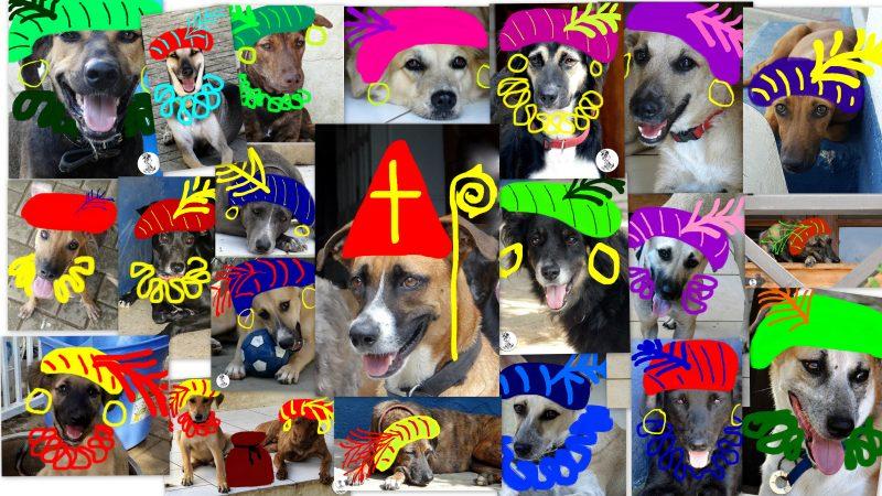 DOG-news 20 november 2016