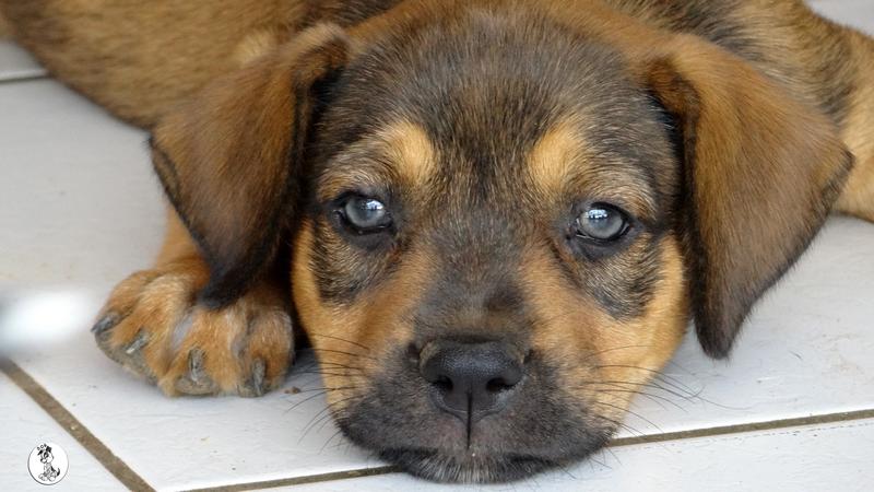 Verouschka (Veerle pup)