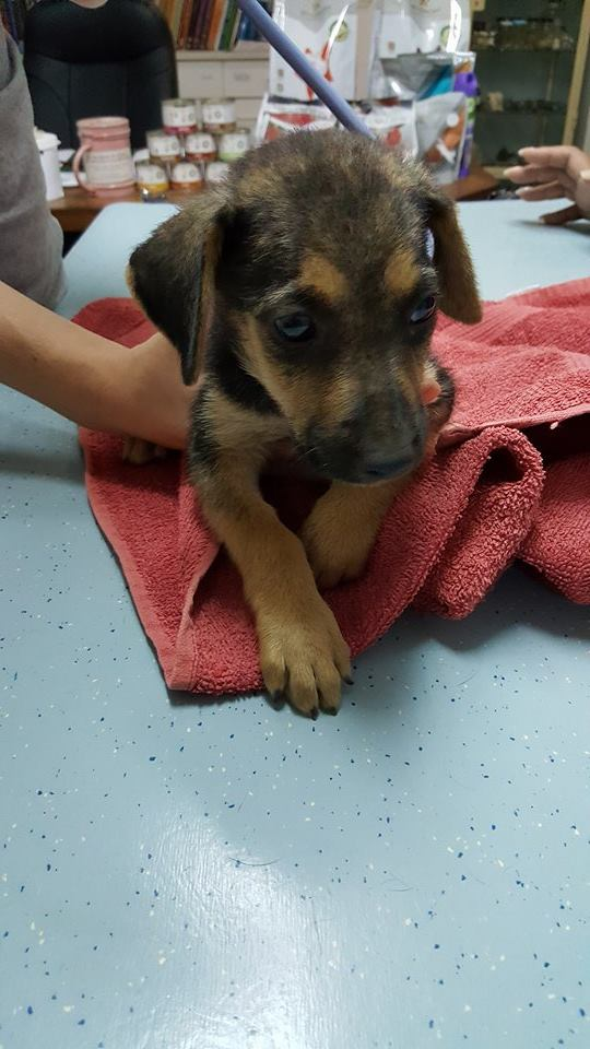 Abba pups (4)