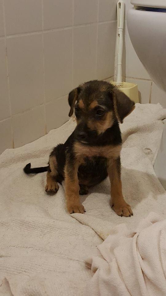 Abba pups (5)