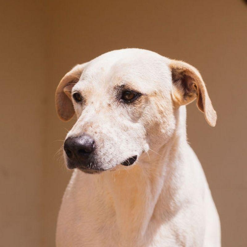 Dapper DOG Curacao (4)