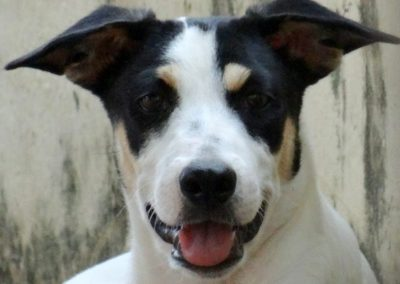 Stella  (Stad pup)