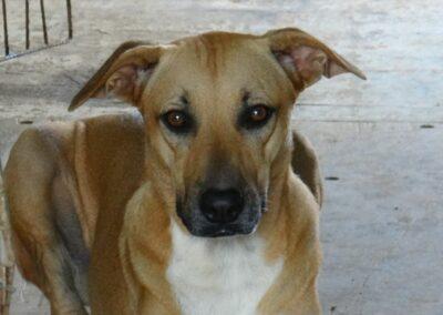 Milou (Marriott pup)
