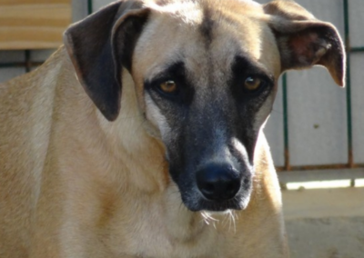 Roxan (R-pup)