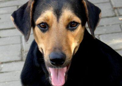 Benny (ABBA pup)
