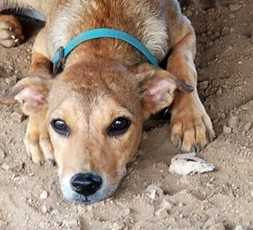 Keet (een Kleine pup)