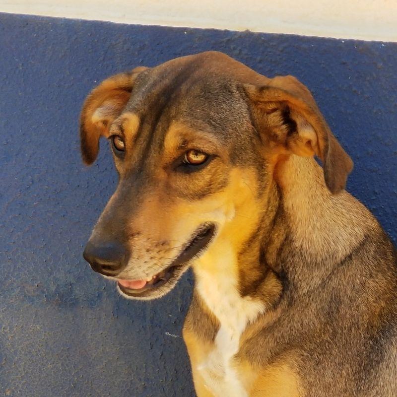 Yara DOG Curacao (1)