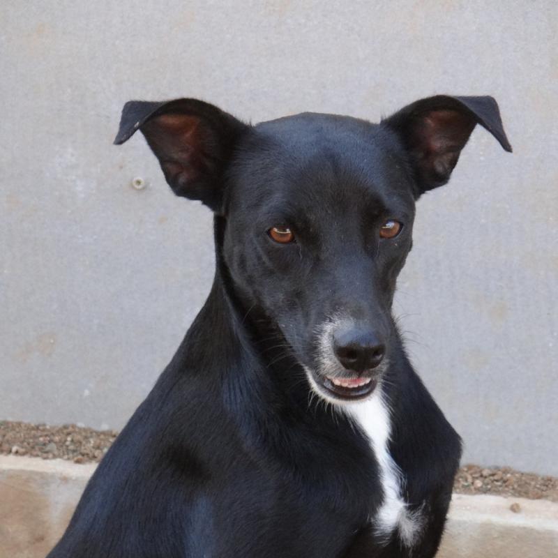 Barney DOG Curacao (7)