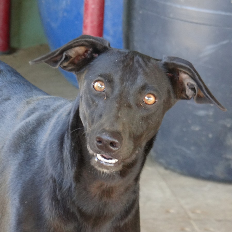Bijou DOG Curacao (1)