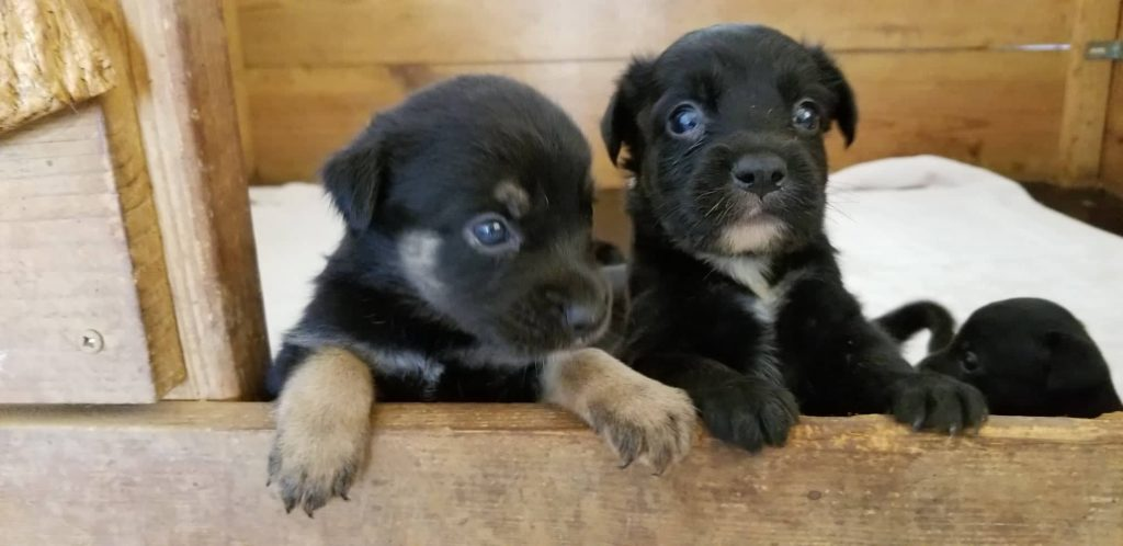 Wilma & pups (7)