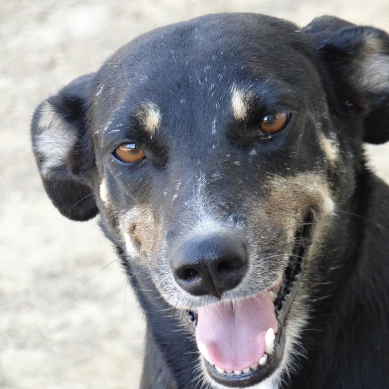 Imke DOG Curacao (7)