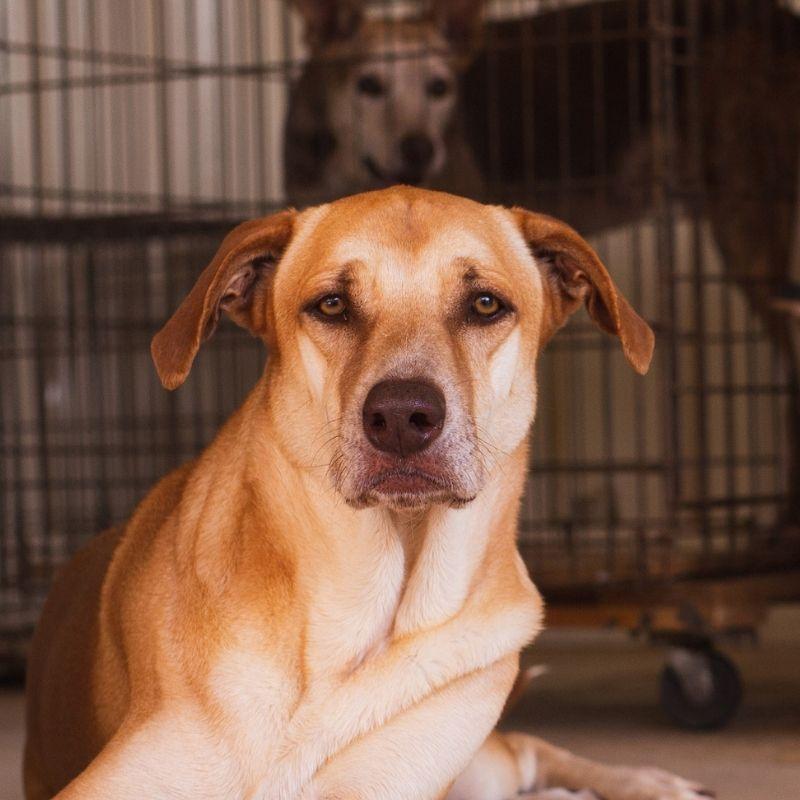 Pepper DOG Curacao (5)