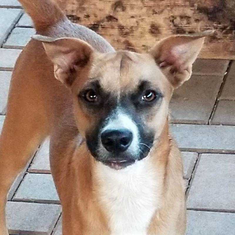 Goldy DOG Curacao (3)