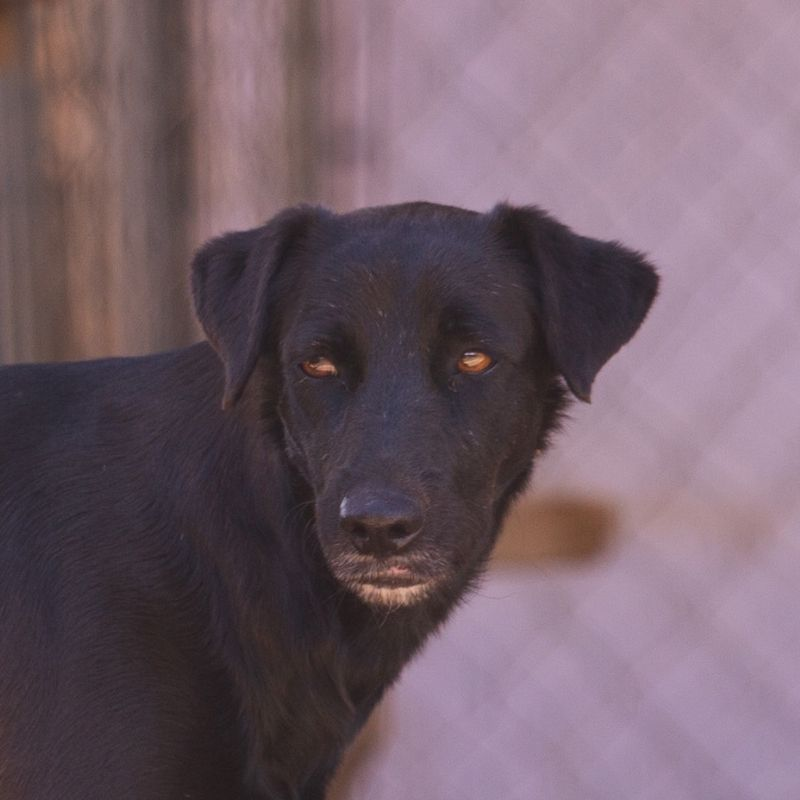 Francine DOG Curacao (1)