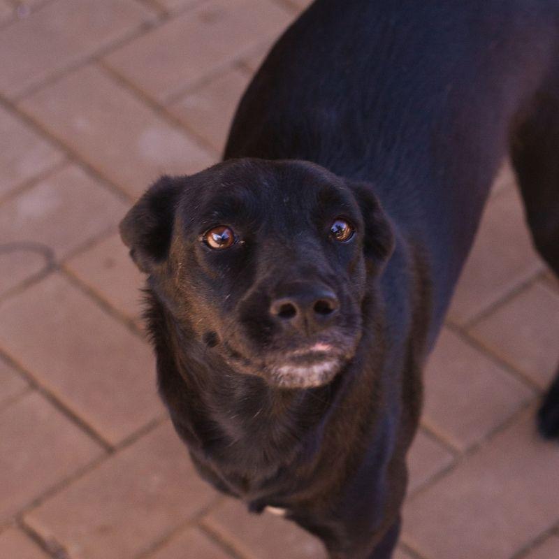 Francine DOG Curacao (2)