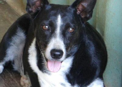 Tecla (Tera Cora pup)
