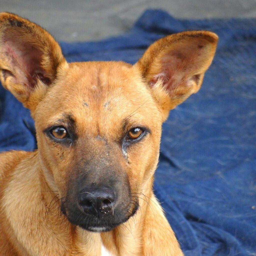 Anak Dog Curacao