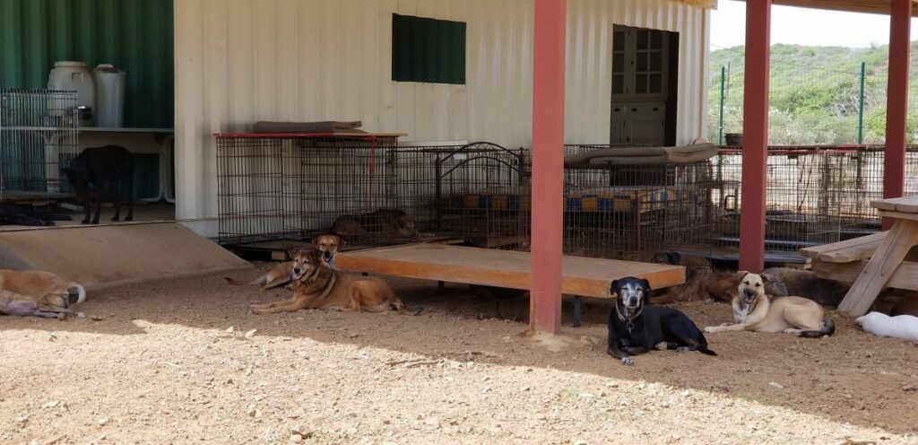 DOG Curacao hondjes in container