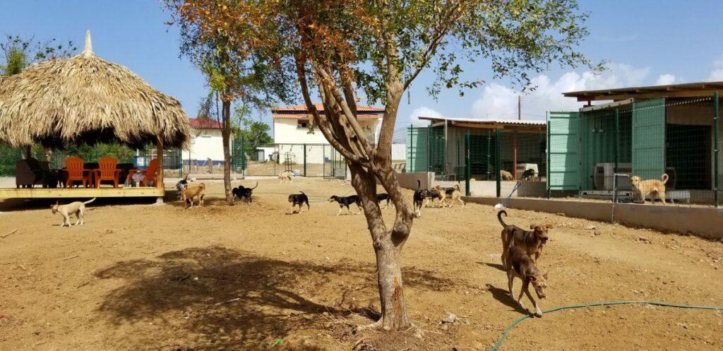 DOG Curacao veld hondjes