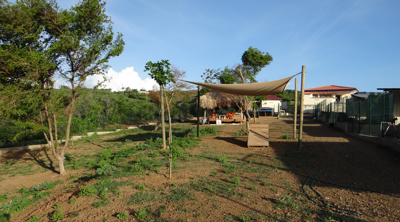 DOG Curacao veld