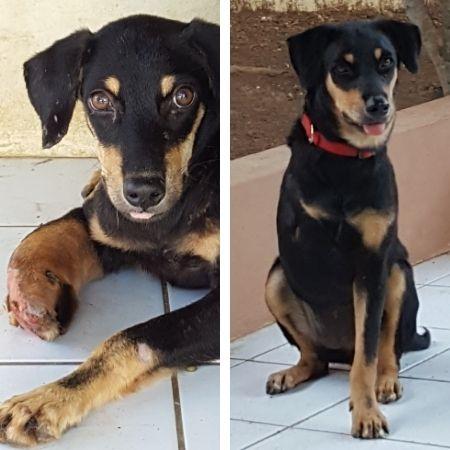 Guusje DOG Curacao (2)