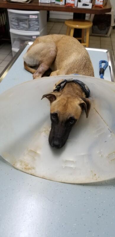 Dusty DOG Curacao (19)