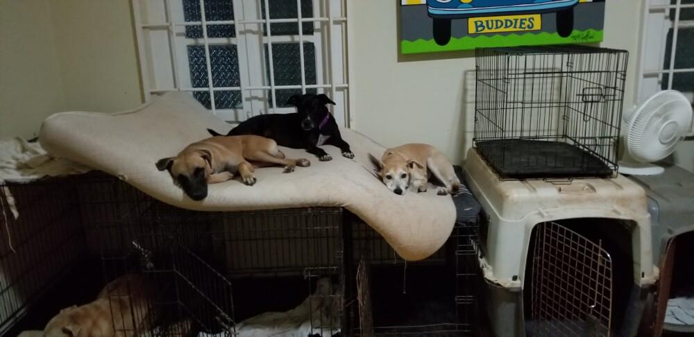 Dusty DOG Curacao (3)