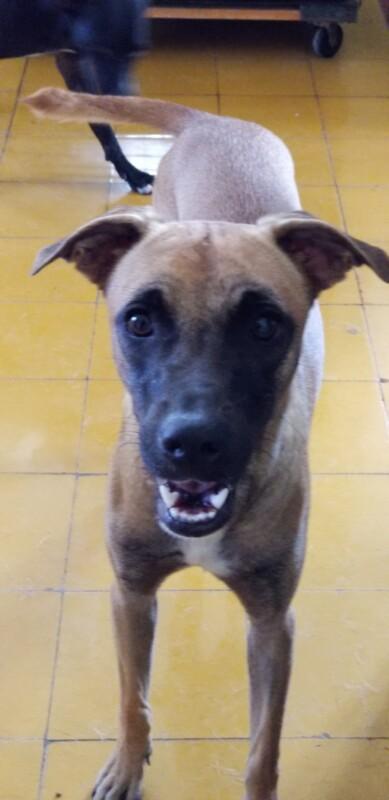 Dusty DOG Curacao (5)