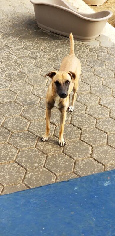 Dusty DOG Curacao (6)