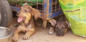 Dynamo puppy 2019 5