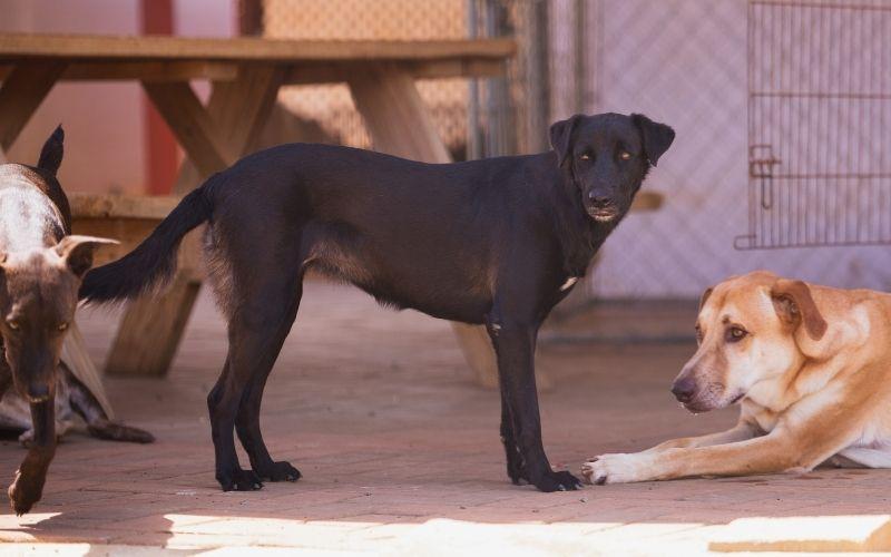 Francine DOG Curacao 2 (2)