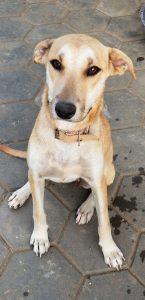 Molly DOG Curacao 4