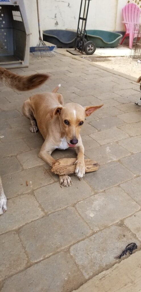 Bente DOG Curacao (1)