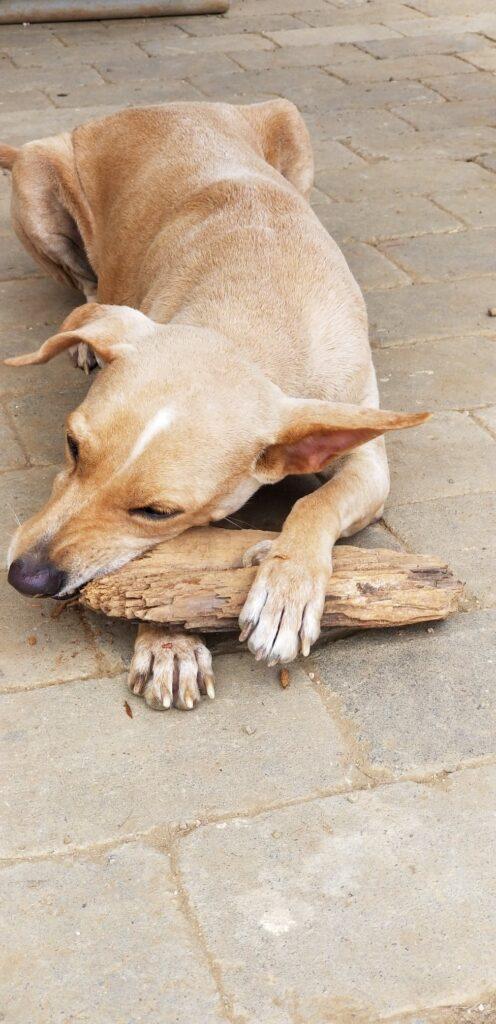 Bente DOG Curacao (2)