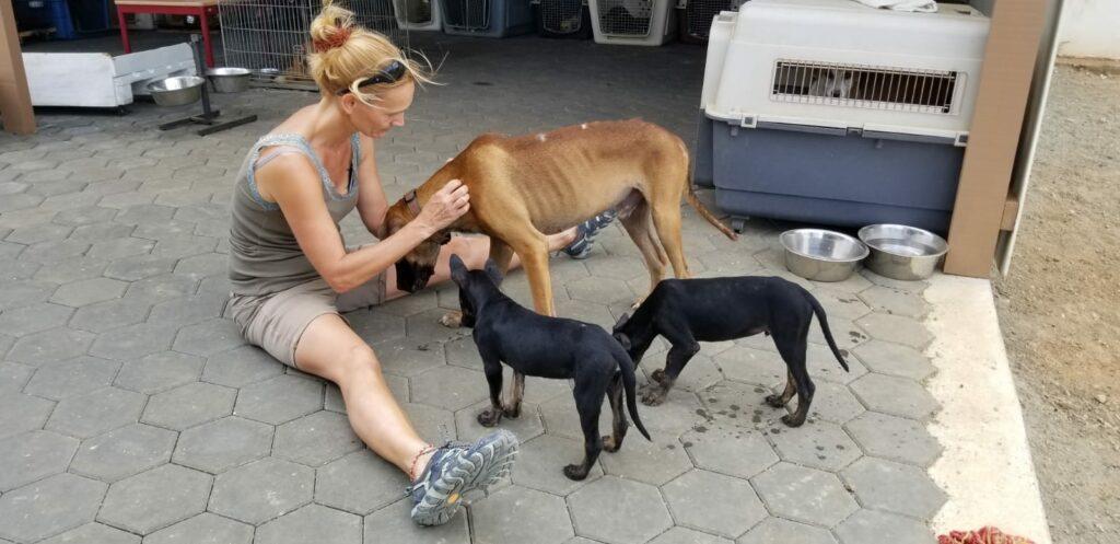 Bones DOG Curacao (1)