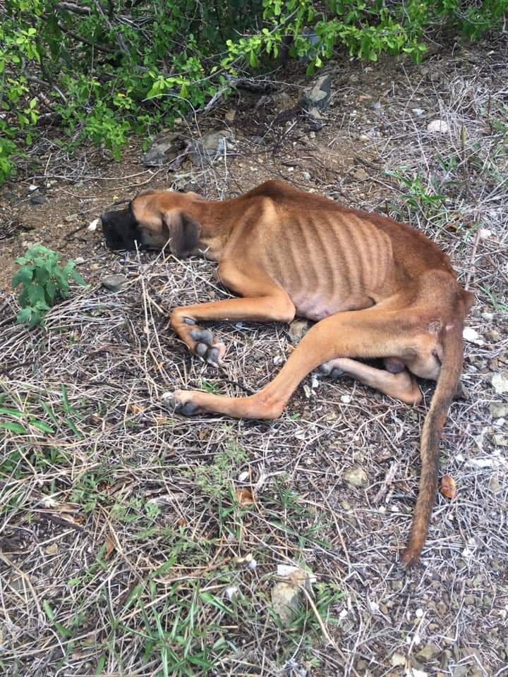 Bones DOG Curacao (16)