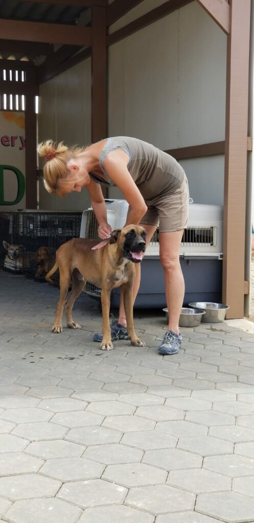 Bones DOG Curacao (18)