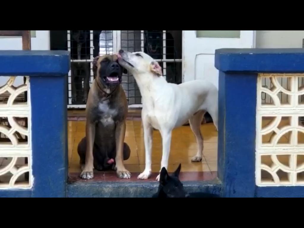 Bones DOG Curacao (3)