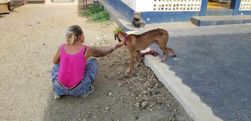 Bones DOG Curacao (4)