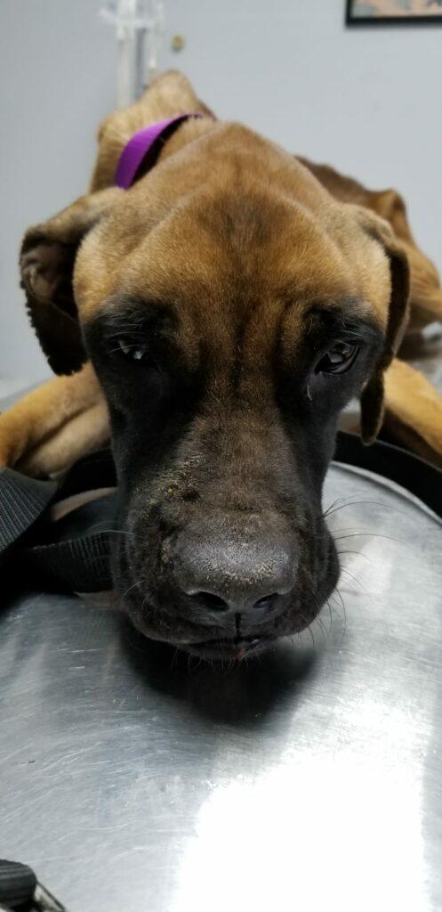 Bones DOG Curacao (9)