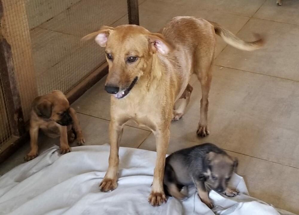 Nashita & pups